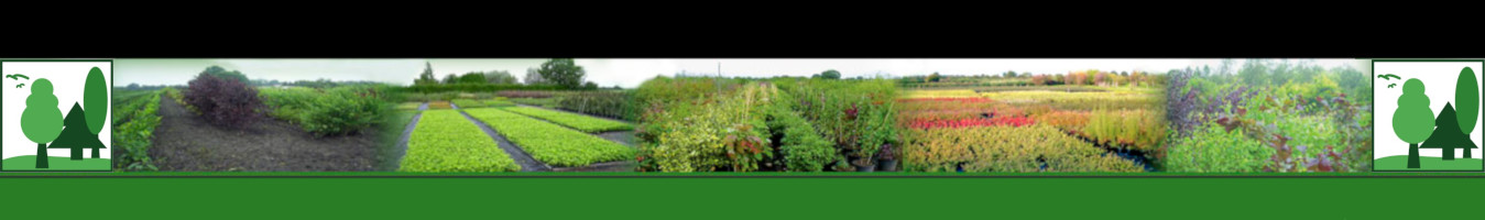 Kirschke Sortimentsbaumschulen - Ihre Baumschule in Barmstedt